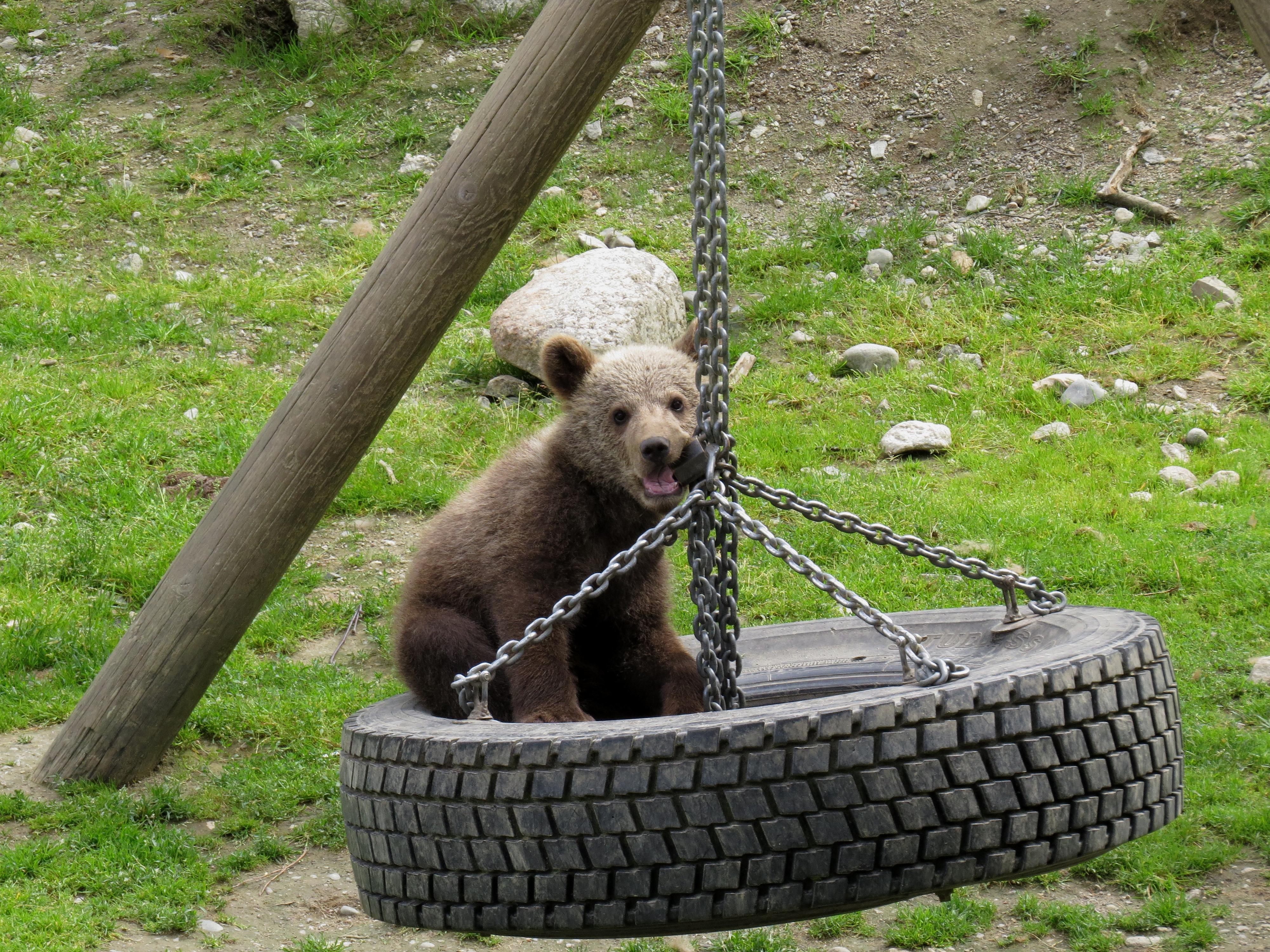 Björnar I Lycksele Djurpark 15e Och 16e Juli Däggdjur Mina